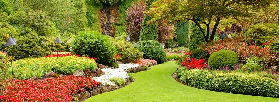 Lush Commercial Gardens