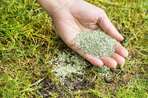 Improve your lawn with fall renovations and planting grass seed