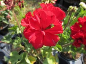 flower (640x480)